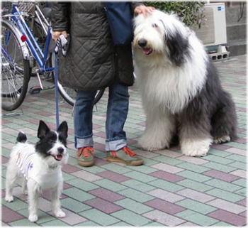 巨大犬.jpg