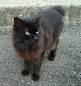 黒猫3.jpg